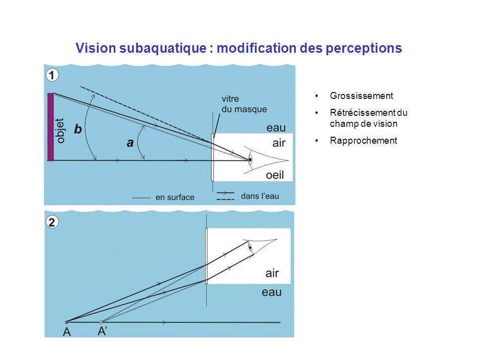 Vision subaquatique : modification des perceptions Grossissement Rétrécissement du champ de vision Rapprochement