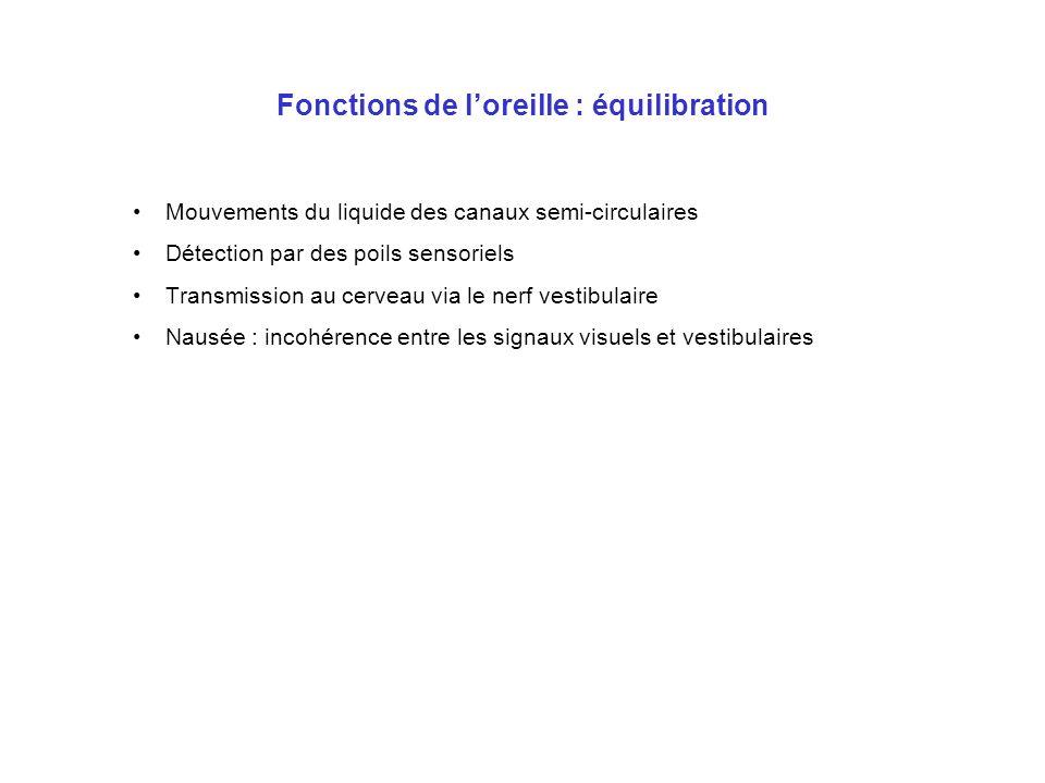 Fonctions de loreille : équilibration Mouvements du liquide des canaux semi-circulaires Détection par des poils sensoriels Transmission au cerveau via
