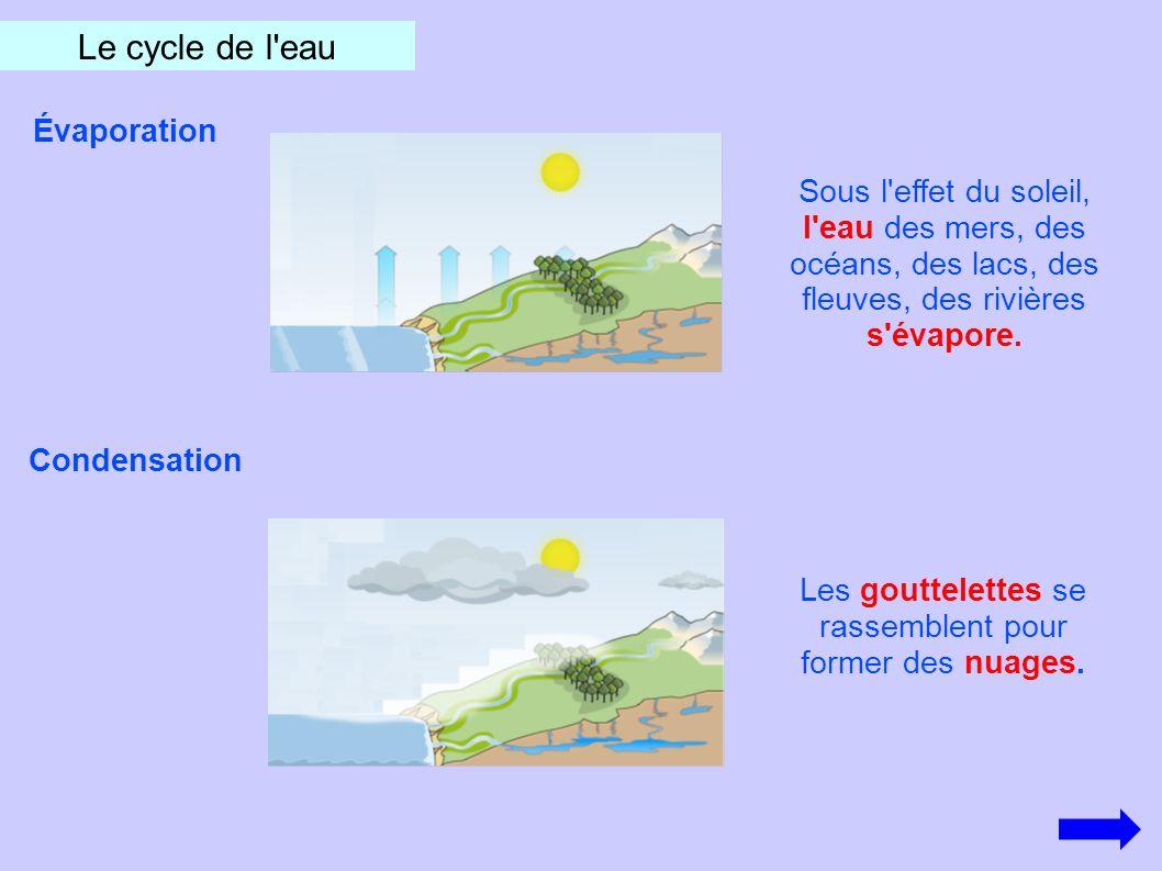 Le cycle de l'eau Évaporation Sous l'effet du soleil, l'eau des mers, des océans, des lacs, des fleuves, des rivières s'évapore. Condensation Les gout