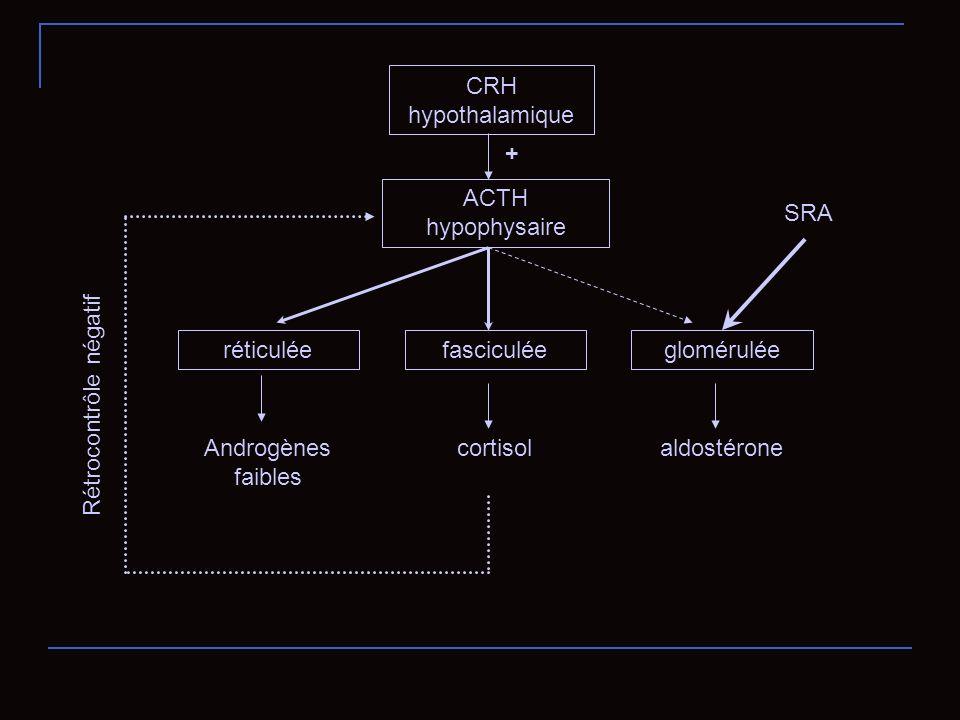 CRH hypothalamique ACTH hypophysaire réticuléefasciculéeglomérulée SRA Androgènes faibles cortisolaldostérone + Rétrocontrôle négatif