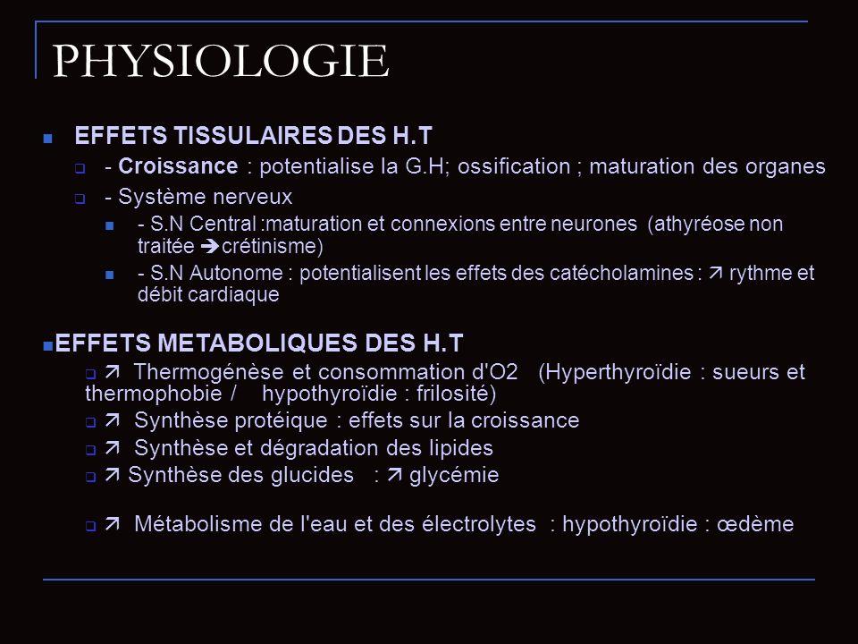 EFFETS TISSULAIRES DES H.T - Croissance : potentialise la G.H; ossification ; maturation des organes - Système nerveux - S.N Central :maturation et co