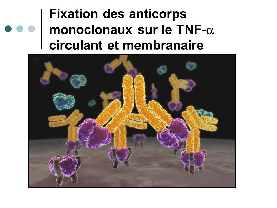 Fixation des anticorps monoclonaux sur le TNF- circulant et membranaire