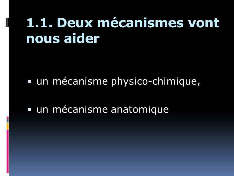 1.1. Deux mécanismes vont nous aider un mécanisme physico-chimique, un mécanisme anatomique
