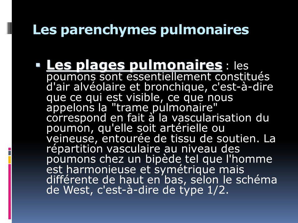 Les parenchymes pulmonaires Les plages pulmonaires Les plages pulmonaires : les poumons sont essentiellement constitués d air alvéolaire et bronchique, c est-à-dire que ce qui est visible, ce que nous appelons la trame pulmonaire correspond en fait à la vascularisation du poumon, qu elle soit artérielle ou veineuse, entourée de tissu de soutien.
