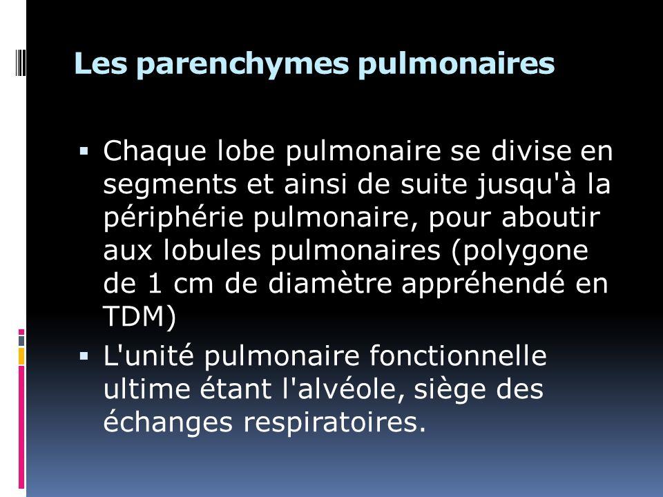Les parenchymes pulmonaires Chaque lobe pulmonaire se divise en segments et ainsi de suite jusqu à la périphérie pulmonaire, pour aboutir aux lobules pulmonaires (polygone de 1 cm de diamètre appréhendé en TDM) L unité pulmonaire fonctionnelle ultime étant l alvéole, siège des échanges respiratoires.