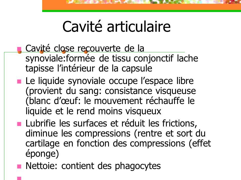 Cavité articulaire Cavité close recouverte de la synoviale:formée de tissu conjonctif lache tapisse lintérieur de la capsule Le liquide synoviale occu