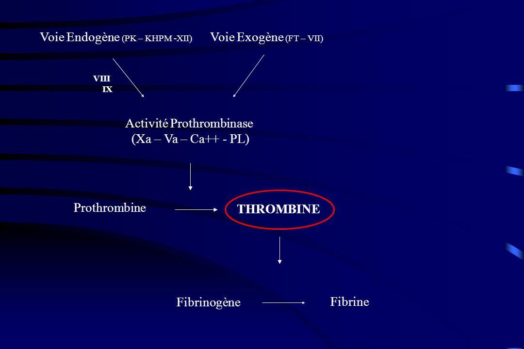THROMBINE Fibrinogène Fibrine Prothrombine Activité Prothrombinase (Xa – Va – Ca++ - PL) Voie Endogène (PK – KHPM -XII) Voie Exogène (FT – VII) VIII IX AT III HNF HBPM Fondaparinux AVK