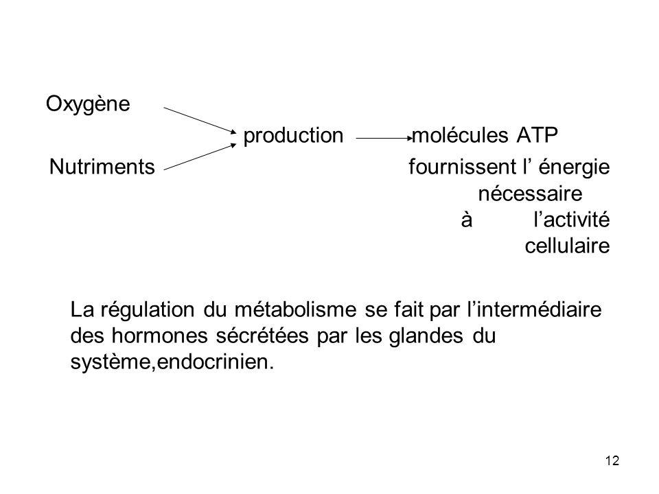 12 Oxygène production molécules ATP Nutriments fournissent l énergie nécessaire à lactivité cellulaire La régulation du métabolisme se fait par lintermédiaire des hormones sécrétées par les glandes du système,endocrinien.