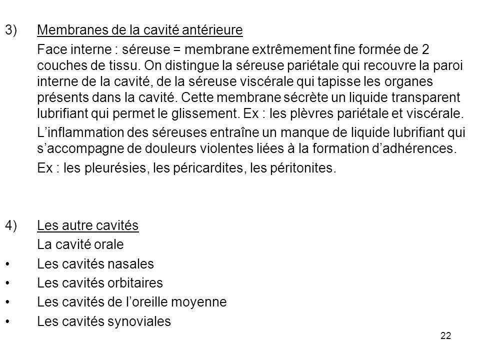 22 3)Membranes de la cavité antérieure Face interne : séreuse = membrane extrêmement fine formée de 2 couches de tissu.