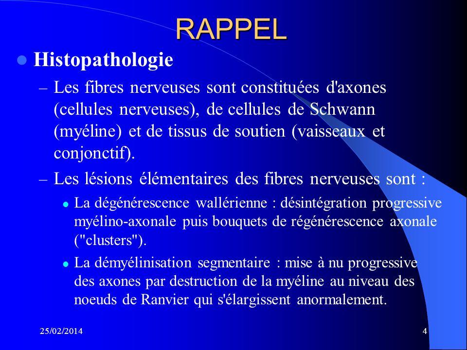 CLINIQUE Atteinte sensitivo-motrice, distale, symétrique, amyotrophiante des 4 membres Abolition des ROT EMG : processus axonale LCR : si pas de cause évidence Biopsie : peu contributive en règle générale 25/02/201414