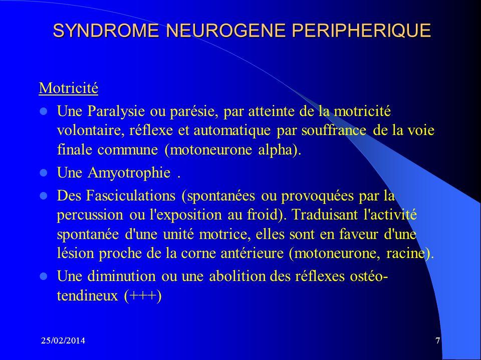 SYNDROME NEUROGENE PERIPHERIQUE Motricité Une Paralysie ou parésie, par atteinte de la motricité volontaire, réflexe et automatique par souffrance de la voie finale commune (motoneurone alpha).