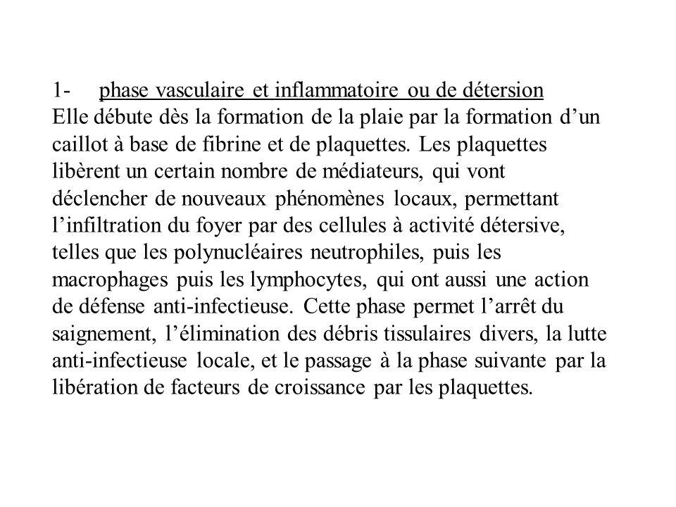 1- phase vasculaire et inflammatoire ou de détersion Elle débute dès la formation de la plaie par la formation dun caillot à base de fibrine et de pla