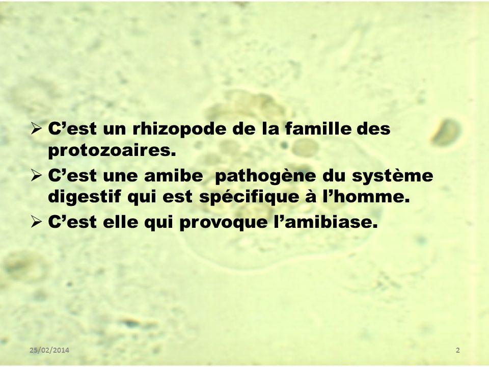 25/02/20142 Cest un rhizopode de la famille des protozoaires. Cest une amibe pathogène du système digestif qui est spécifique à lhomme. Cest elle qui