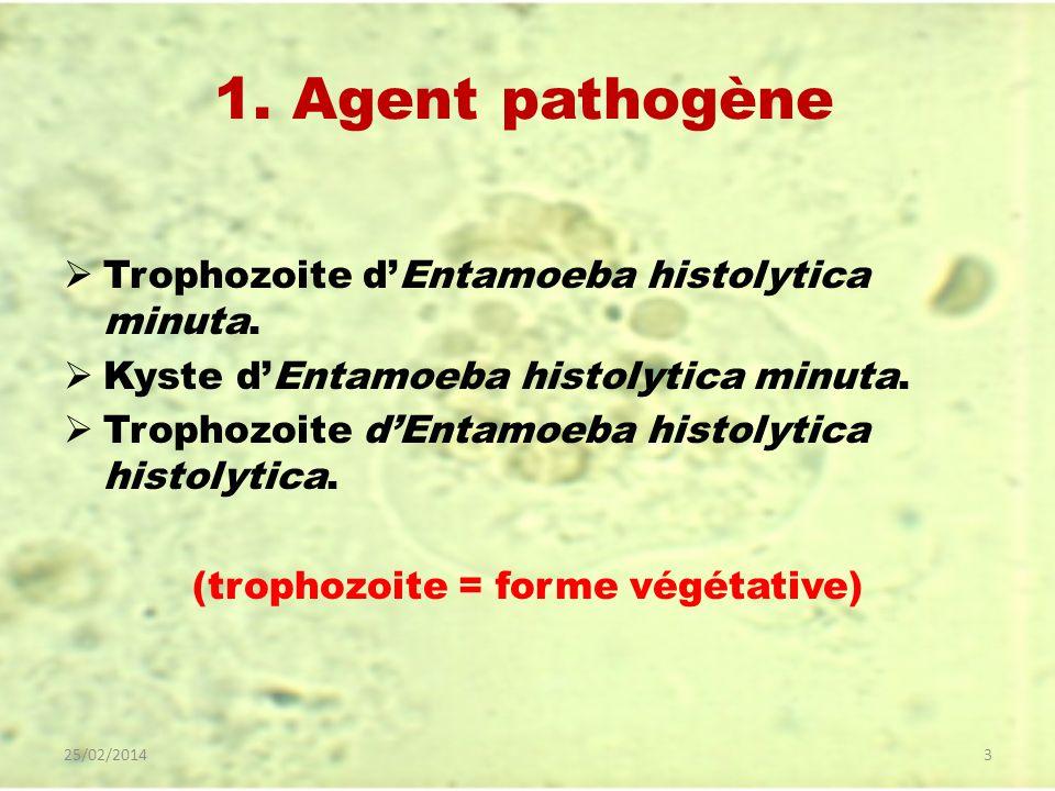 1. Agent pathogène Trophozoite dEntamoeba histolytica minuta. Kyste dEntamoeba histolytica minuta. Trophozoite dEntamoeba histolytica histolytica. (tr