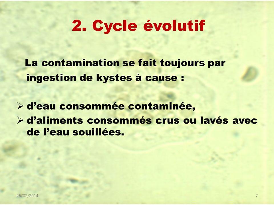 2. Cycle évolutif La contamination se fait toujours par ingestion de kystes à cause : deau consommée contaminée, daliments consommés crus ou lavés ave