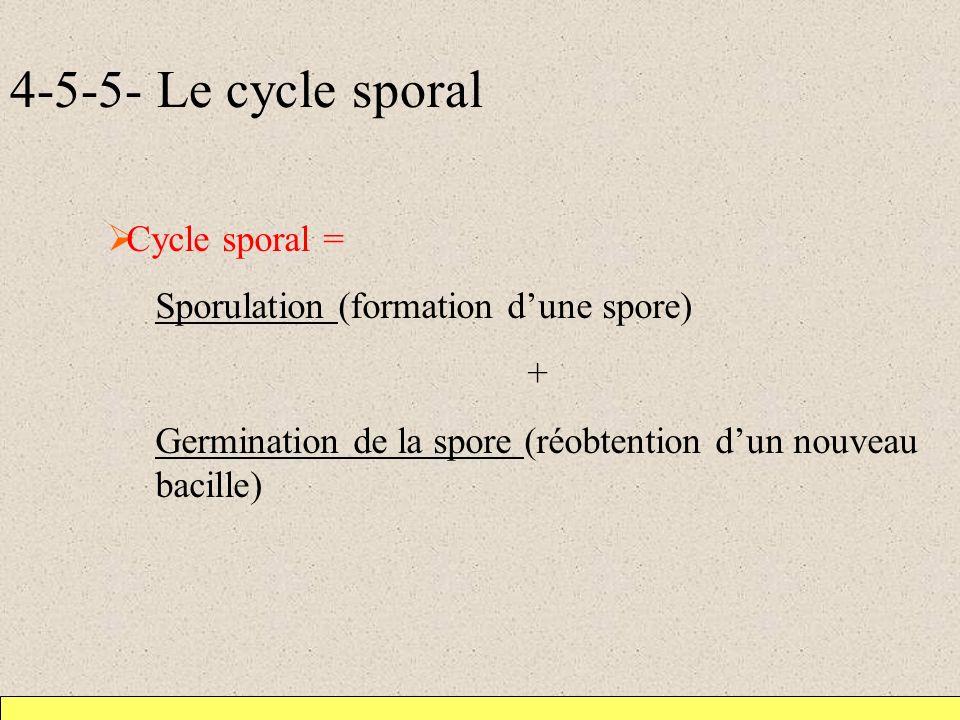 4-5-5- Le cycle sporal Cycle sporal = Sporulation (formation dune spore) + Germination de la spore (réobtention dun nouveau bacille)