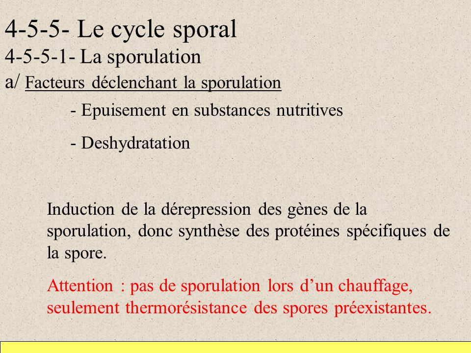 4-5-5- Le cycle sporal 4-5-5-1- La sporulation a/ Facteurs déclenchant la sporulation - Epuisement en substances nutritives - Deshydratation Induction