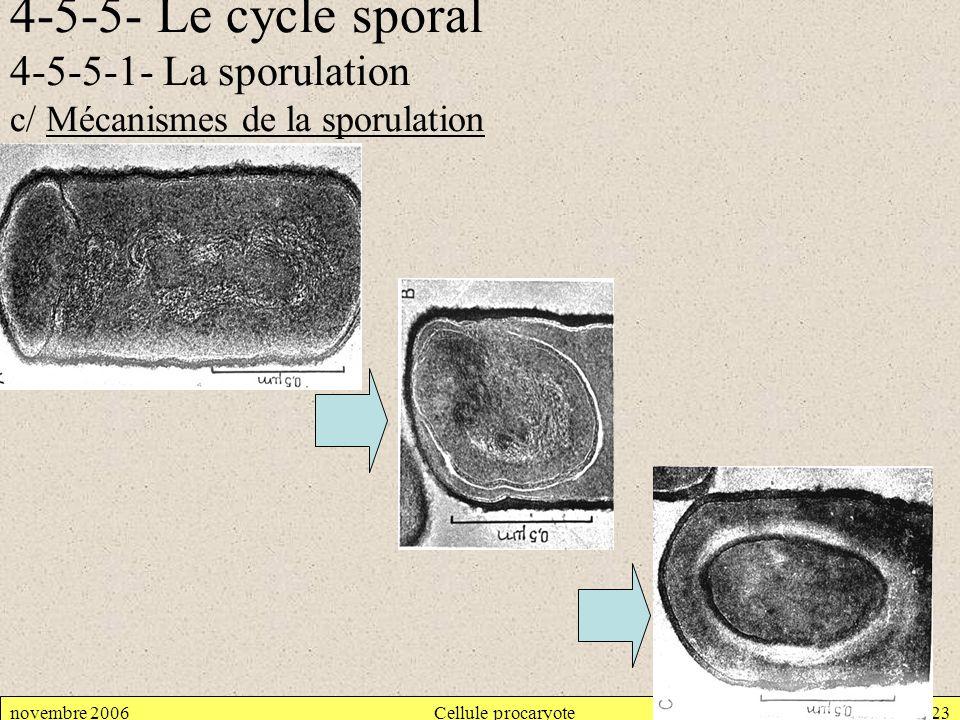 4-5-5- Le cycle sporal 4-5-5-1- La sporulation c/ Mécanismes de la sporulation novembre 2006Cellule procaryote23