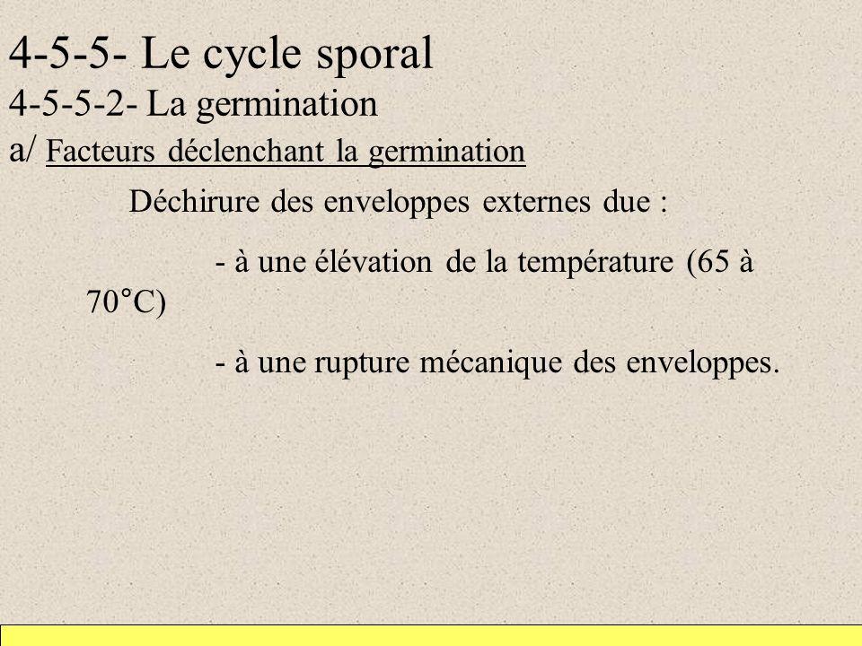 4-5-5- Le cycle sporal 4-5-5-2- La germination a/ Facteurs déclenchant la germination Déchirure des enveloppes externes due : - à une élévation de la