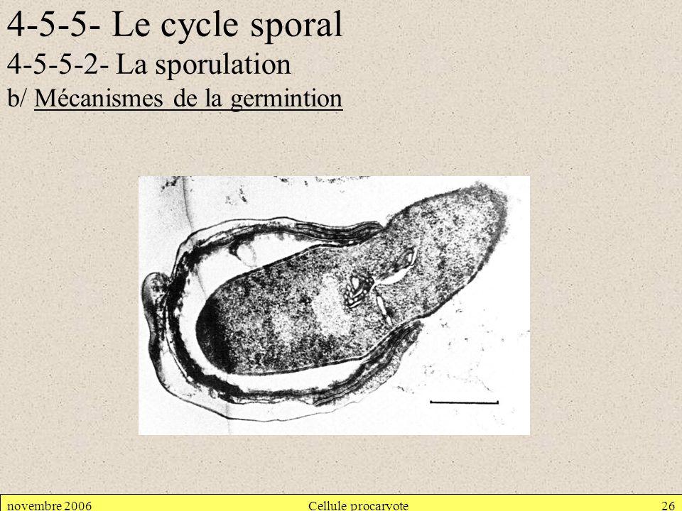 4-5-5- Le cycle sporal 4-5-5-2- La sporulation b/ Mécanismes de la germintion novembre 2006Cellule procaryote26
