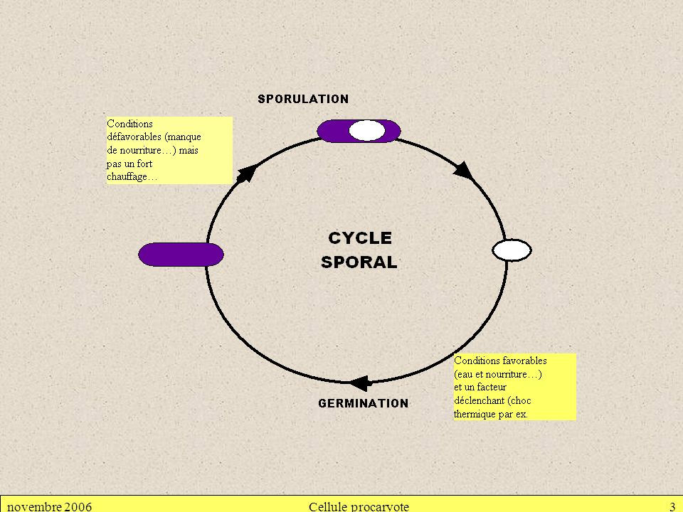 novembre 2006Cellule procaryote3