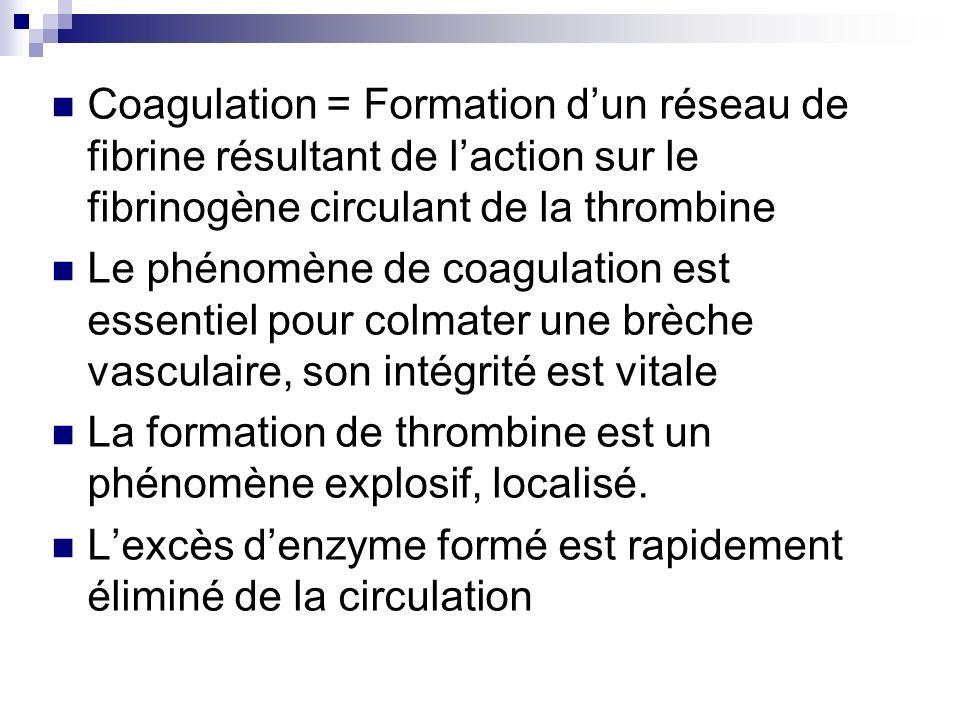 Coagulation = Formation dun réseau de fibrine résultant de laction sur le fibrinogène circulant de la thrombine Le phénomène de coagulation est essent