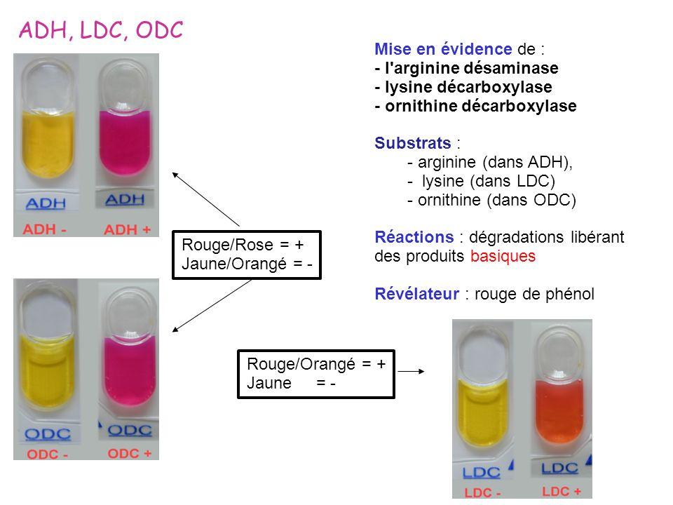 ADH, LDC, ODC Mise en évidence de : - l'arginine désaminase - lysine décarboxylase - ornithine décarboxylase Substrats : - arginine (dans ADH), - lysi