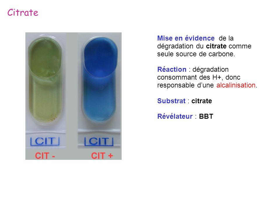 Citrate Mise en évidence de la dégradation du citrate comme seule source de carbone. Réaction : dégradation consommant des H+, donc responsable dune a