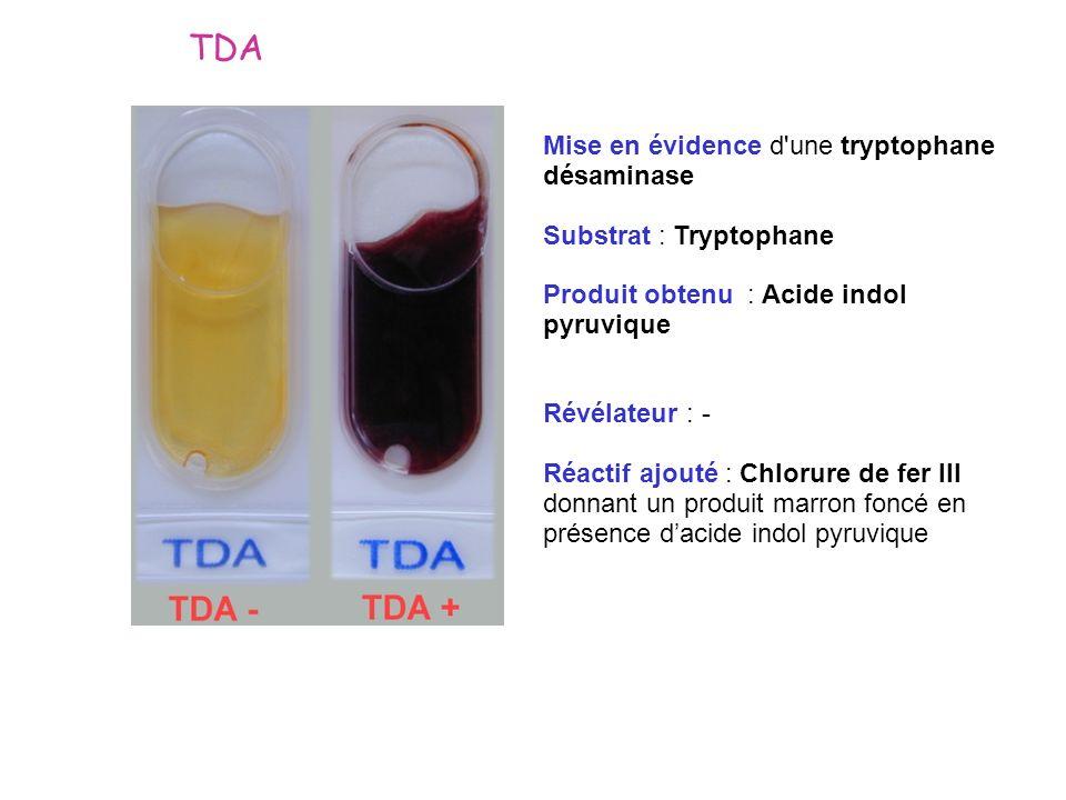 Mise en évidence d'une tryptophane désaminase Substrat : Tryptophane Produit obtenu : Acide indol pyruvique Révélateur : - Réactif ajouté : Chlorure d
