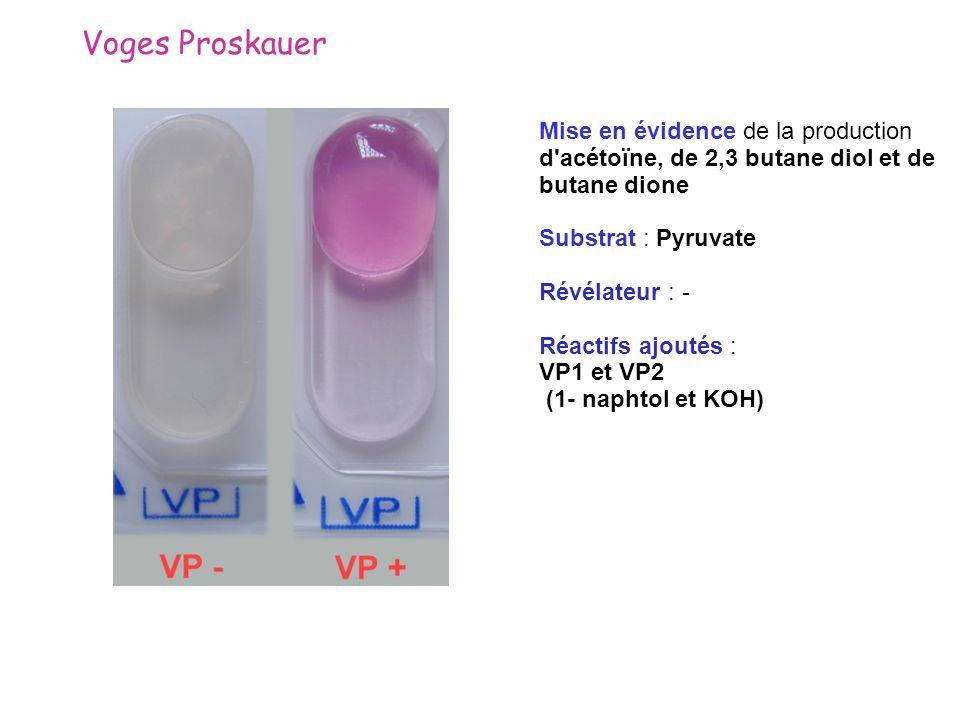 Voges Proskauer Mise en évidence de la production d'acétoïne, de 2,3 butane diol et de butane dione Substrat : Pyruvate Révélateur : - Réactifs ajouté