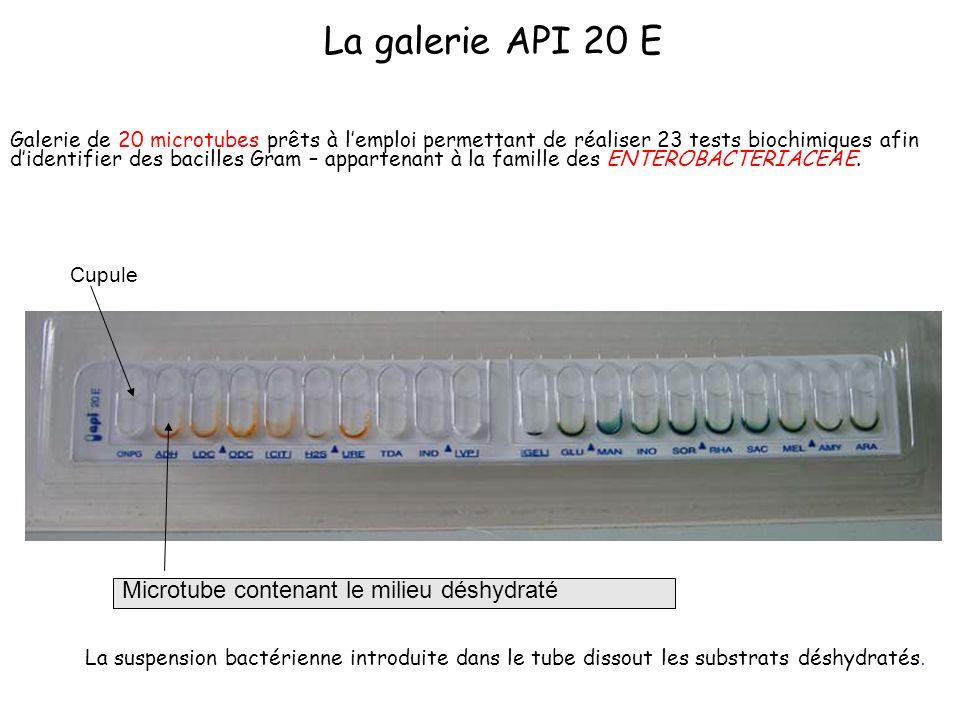ADH, LDC, ODC Mise en évidence de : - l arginine désaminase - lysine décarboxylase - ornithine décarboxylase Substrats : - arginine (dans ADH), - lysine (dans LDC) - ornithine (dans ODC) Réactions : dégradations libérant des produits basiques Révélateur : rouge de phénol Rouge/Rose = + Jaune/Orangé = - Rouge/Orangé = + Jaune = -