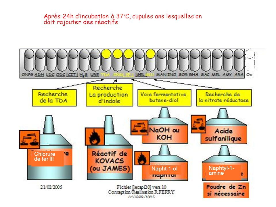 4- Lecture de la galerie API 20 E Après 24h dincubation à 37°C, cupules ans lesquelles on doit rajouter des réactifs Napht-1-ol Naphtyl-1- amine Chlor
