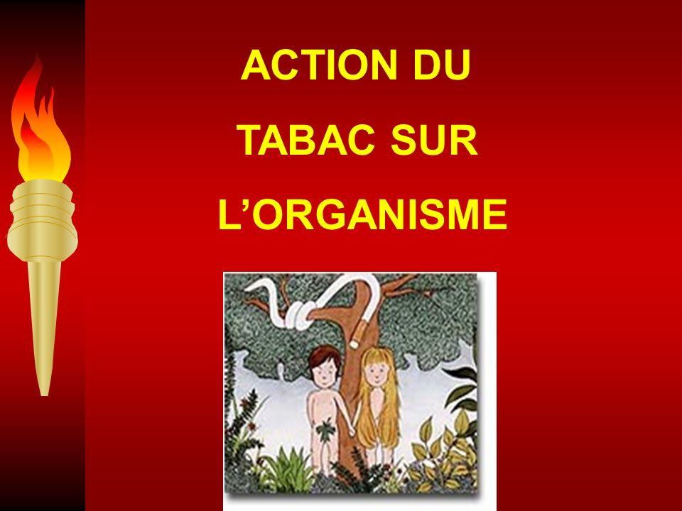 ACTION DU TABAC SUR LORGANISME