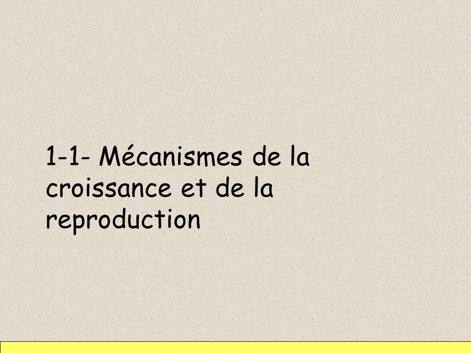 1-1-1- Croissance -Réplication du DNA (de lADN) ce qui conduit à la présence temporaire de 2 molécules de DNA dans le cytoplasme -Synthèse de paroi, de membrane plasmique : allongement de la bactérie -Synthèse de constituants cytoplasmiques 6