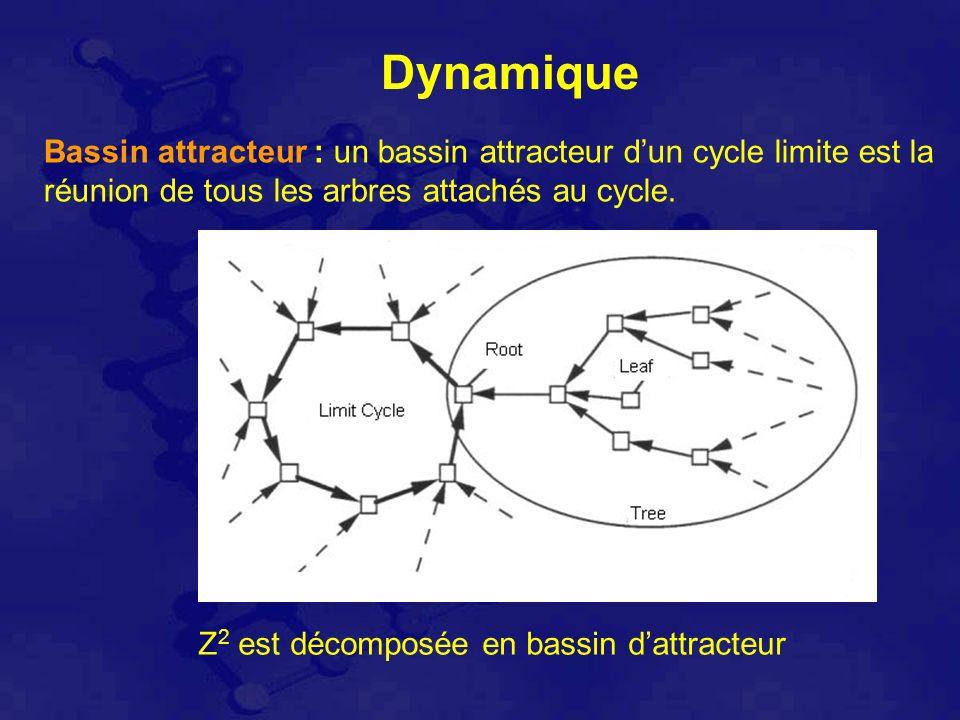 Dynamique Bassin attracteur : un bassin attracteur dun cycle limite est la réunion de tous les arbres attachés au cycle.