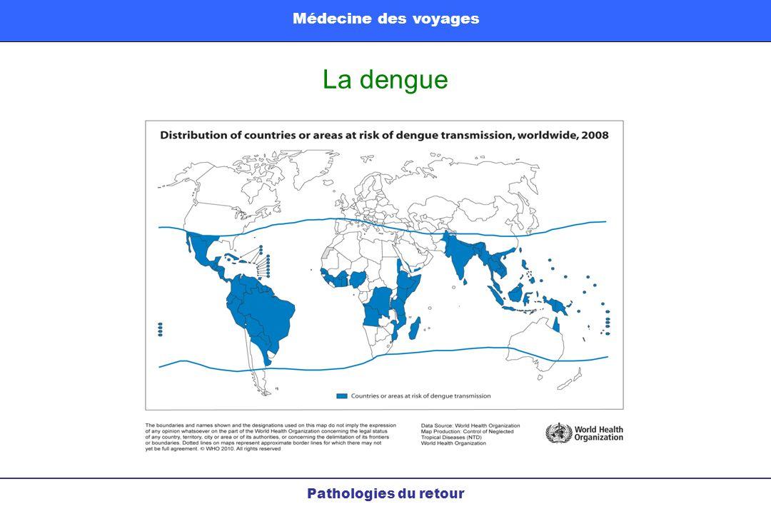 La dengue Pathologies du retour Médecine des voyages
