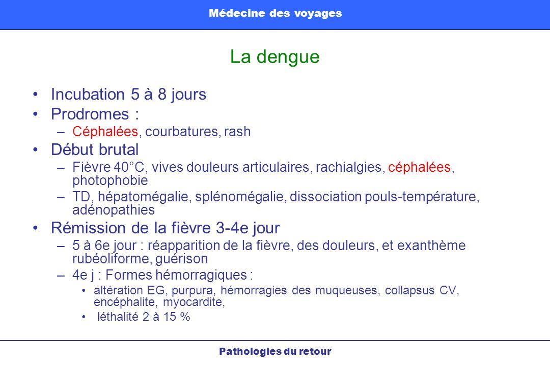 La dengue Incubation 5 à 8 jours Prodromes : –Céphalées, courbatures, rash Début brutal –Fièvre 40°C, vives douleurs articulaires, rachialgies, céphal