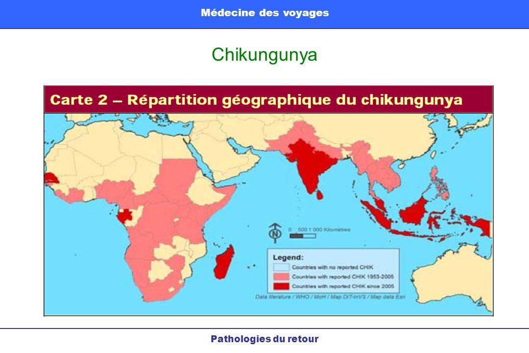 Chikungunya Pathologies du retour Médecine des voyages