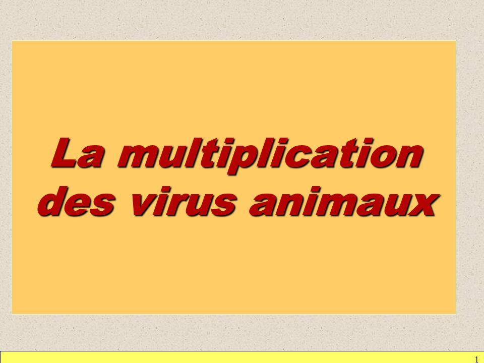Nécessité : – que le virus se fixe sur la cellule hôte (adsorption) –que le virus pénètre dans la cellule hôte –que le virus détourne la machinerie métabolique à son profit, bloque toute expression de la cellule parasitée et quil y ait synthèse des divers constituants viraux –quil y ait assemblage des constituants – que se produise la libération des virus formés