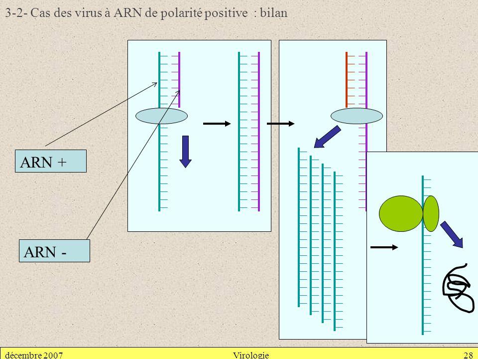 décembre 2007Virologie28 3-2- Cas des virus à ARN de polarité positive : bilan ARN + ARN -