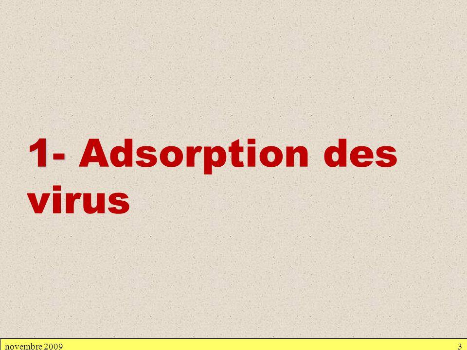 novembre 20093 1- 1- Adsorption des virus