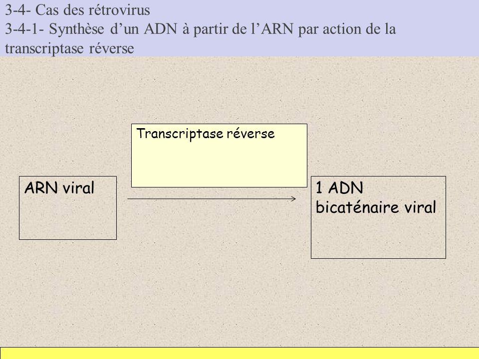 3-4- Cas des rétrovirus 3-4-1- Synthèse dun ADN à partir de lARN par action de la transcriptase réverse ARN viral1 ADN bicaténaire viral Transcriptase