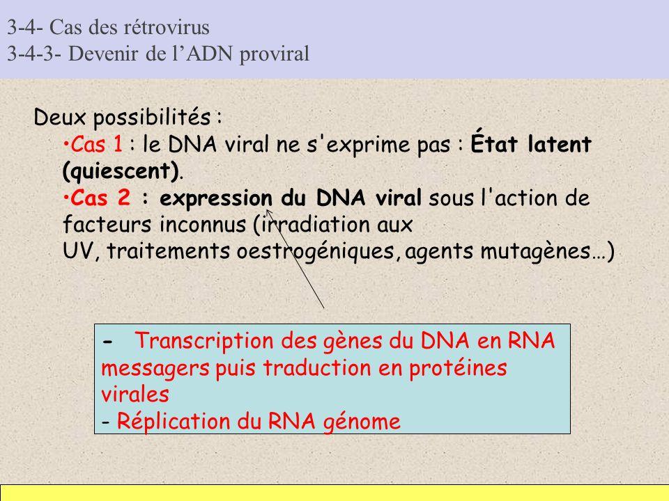 3-4- Cas des rétrovirus 3-4-3- Devenir de lADN proviral Deux possibilités : Cas 1 : le DNA viral ne s'exprime pas : État latent (quiescent). Cas 2 : e