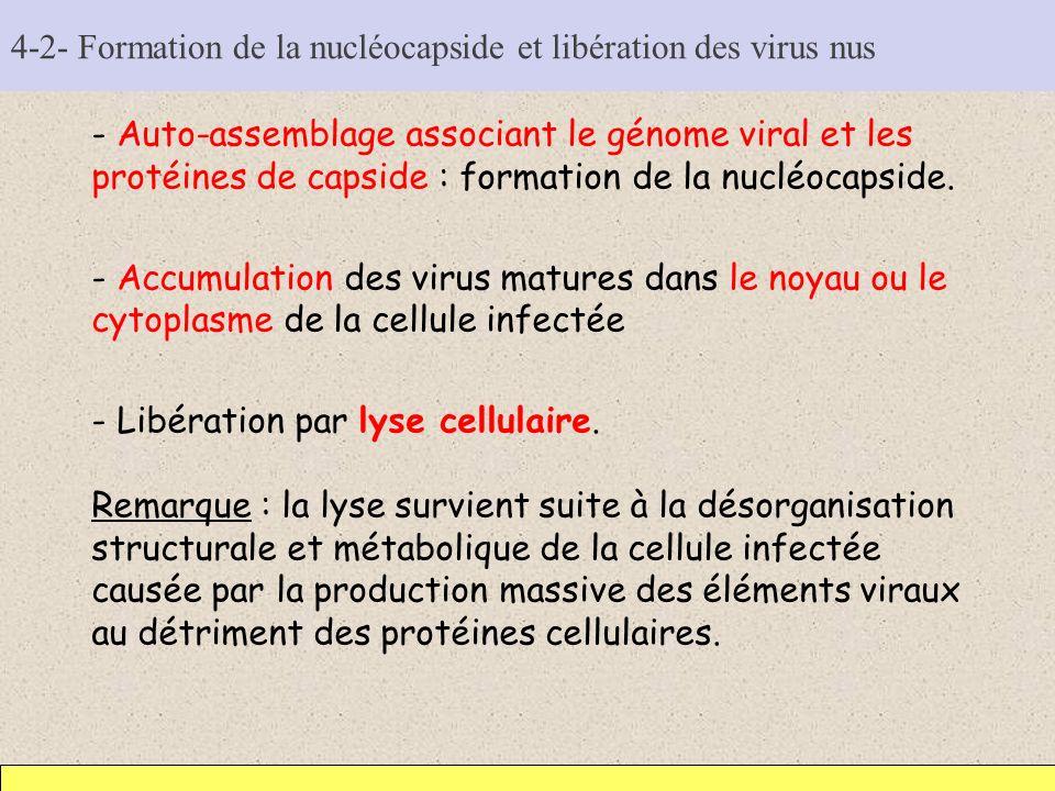 4-2- Formation de la nucléocapside et libération des virus nus - Auto-assemblage associant le génome viral et les protéines de capside : formation de