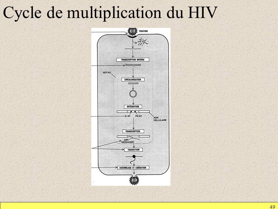 Cycle de multiplication du HIV 49