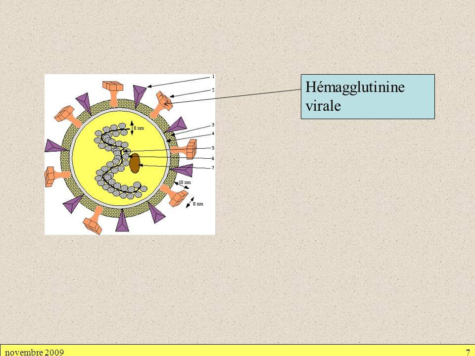 novembre 20097 Hémagglutinine virale