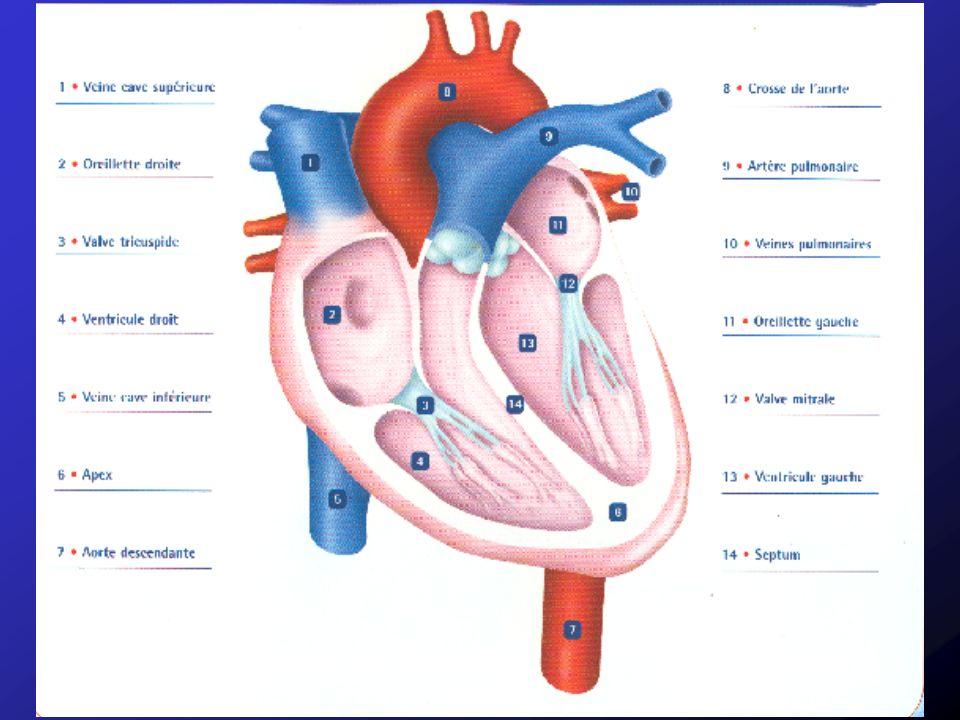 Examens paracliniques RP: Œdème pulmonaire, OG dilatée, +/- dilatations cavités droites et artères pulmonaires ECG: pas de signes nets, HAG ou arythmie auriculaire Echographie cardiaque: Permet la confirmation et lévaluation de la sévérité