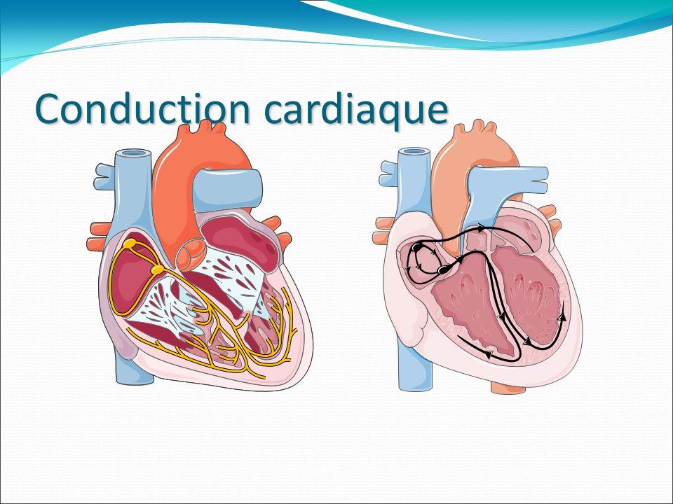 Le stimulateur cardiaque - il pallie au ralentissement important et gênant du rythme du cœur, en envoyant une impulsion électrique, il provoque sa contraction ( un boitier contenant le dispositif électronique et la source dénergie la pile,des électrodes sont reliées jusque dans le ventricules et/ ou loreillette), il a une durée de vie de 6 à 8 ans.