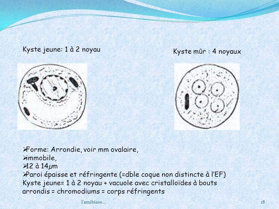 l'amibiase...18 Kyste jeune: 1 à 2 noyau Forme: Arrondie, voir mm ovalaire, immobile, 12 à 14µm Paroi épaisse et réfringente (=dble coque non distinct