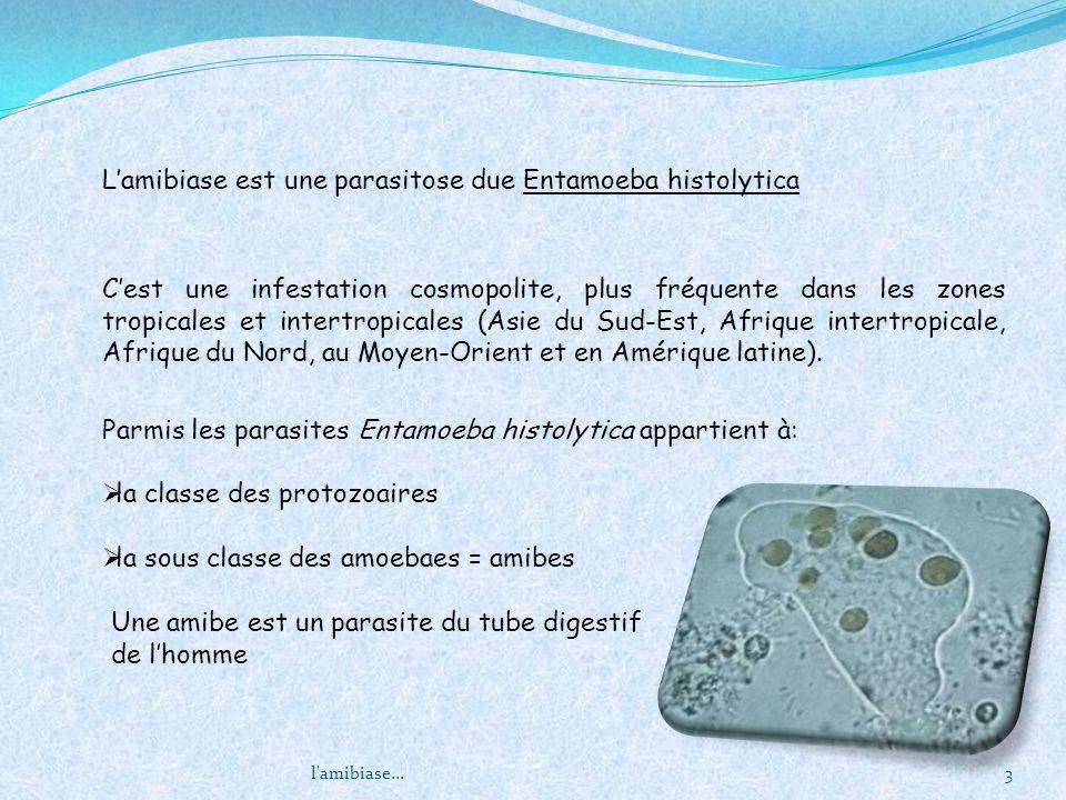 Lamibiase est une parasitose due Entamoeba histolytica Parmis les parasites Entamoeba histolytica appartient à: la classe des protozoaires la sous cla